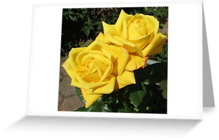 Beauty Queens - Sunkissed Golden Roses by BlueMoonRose
