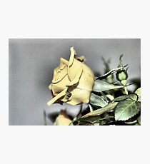 My Yellow Rose Photographic Print