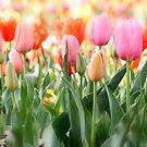 Memories of Spring by NinaJoan