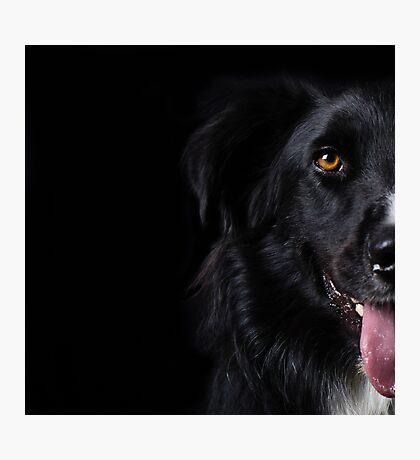 Half a dog Photographic Print