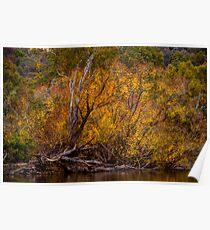 Murray River Autumn - Jingellic NSW/Walwa VIC - The HDR Experience Poster