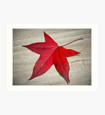 Autumn Leaf 21/06/13 Art Print