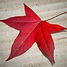 Autumn Leaf 21/06/13 by pennyswork