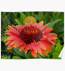 Red Echinacea Poster
