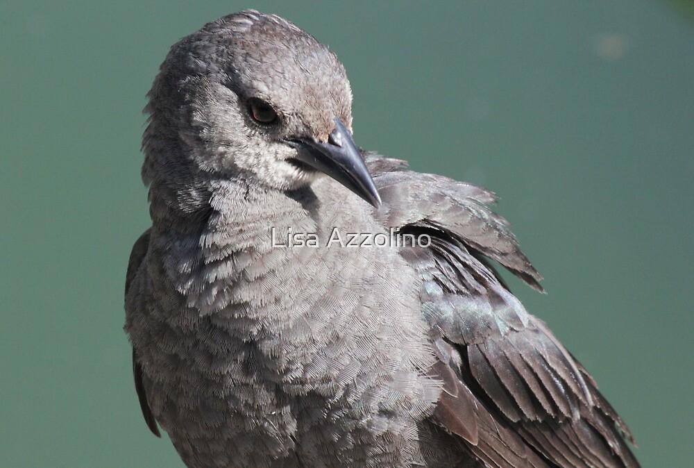Little Bird by Lisa Azzolino