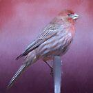Housefinch by KathleenRinker