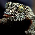Leaf tailed Gecko ( Uroplatus Henkeli ) Antasibe Madagascar by john  Lenagan