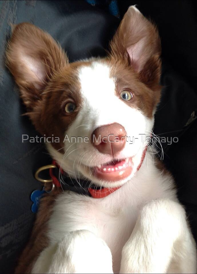 Lola, my adorable pup! by Patricia Anne McCarty-Tamayo