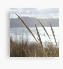 Great Ocean Dreamimg ~ Apollo Bay, Victoria Canvas Print
