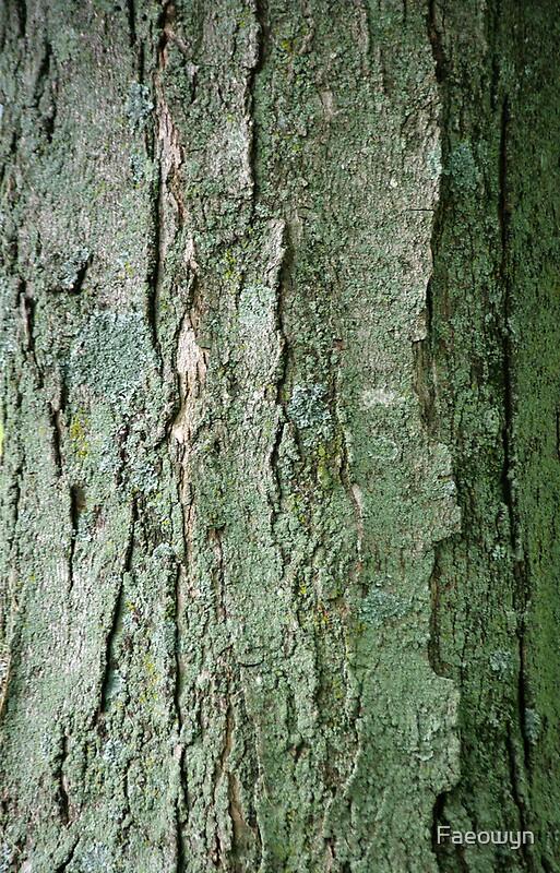 """Sugar Maple Tree Bark"" iPhone Cases & Skins by Shari ..."