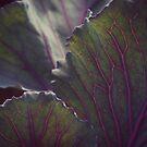 Red Cabbage by Joshua Greiner