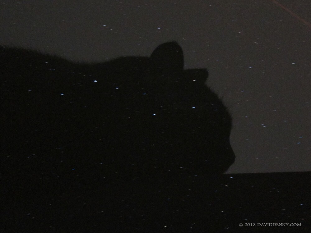 Cat Silhouette among the Stars by David Denny