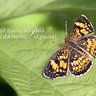 Butterfly Stripes – 2:3 by Janelle Wourms