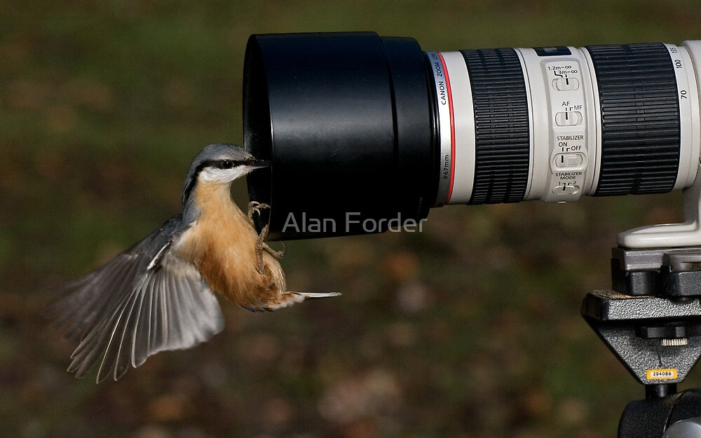 Too close to focus by Alan Forder