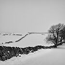 Jigsaw in the whiteness by clickinhistory