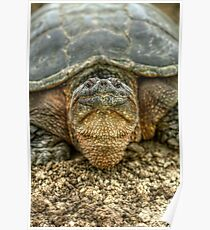 Snapping Turtle IX Poster