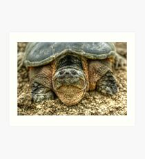 Snapping Turtle VI Art Print