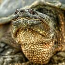 Snapping Turtle X by Ashlee White