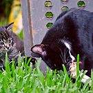 Kitten Playing With Its Mama by georgiaart1974
