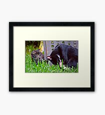 Kitten Playing With Its Mama Framed Print