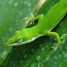 I Love Green by Bill Morgenstern
