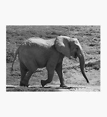 Laughing Elephant in Black & White  Photographic Print
