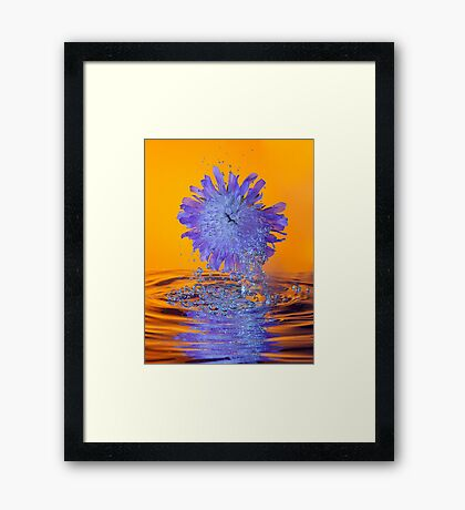 Scabious with Bubbles and Reflection Framed Print