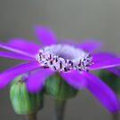 Pretty in Purple by SKNickel