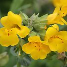 Yellow Flowers by Annie Underwood