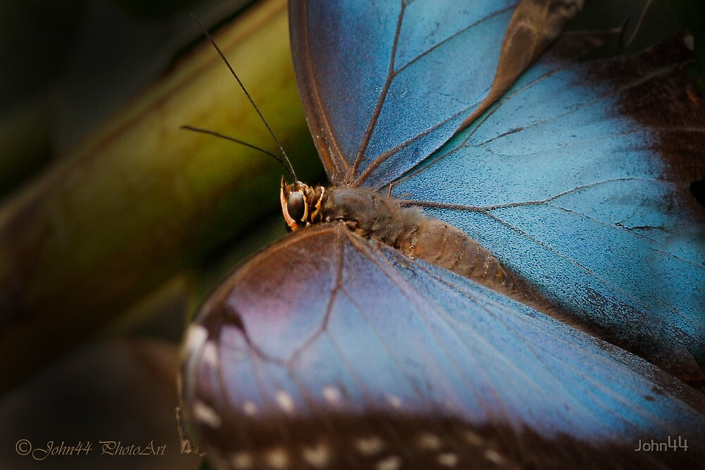 ..a Butterfly's last hour ... [FEATURED] by John44