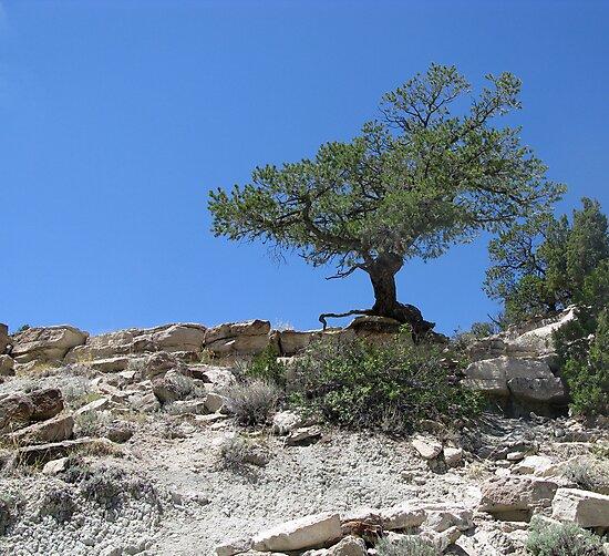 Tough Tree by Patrick Bate