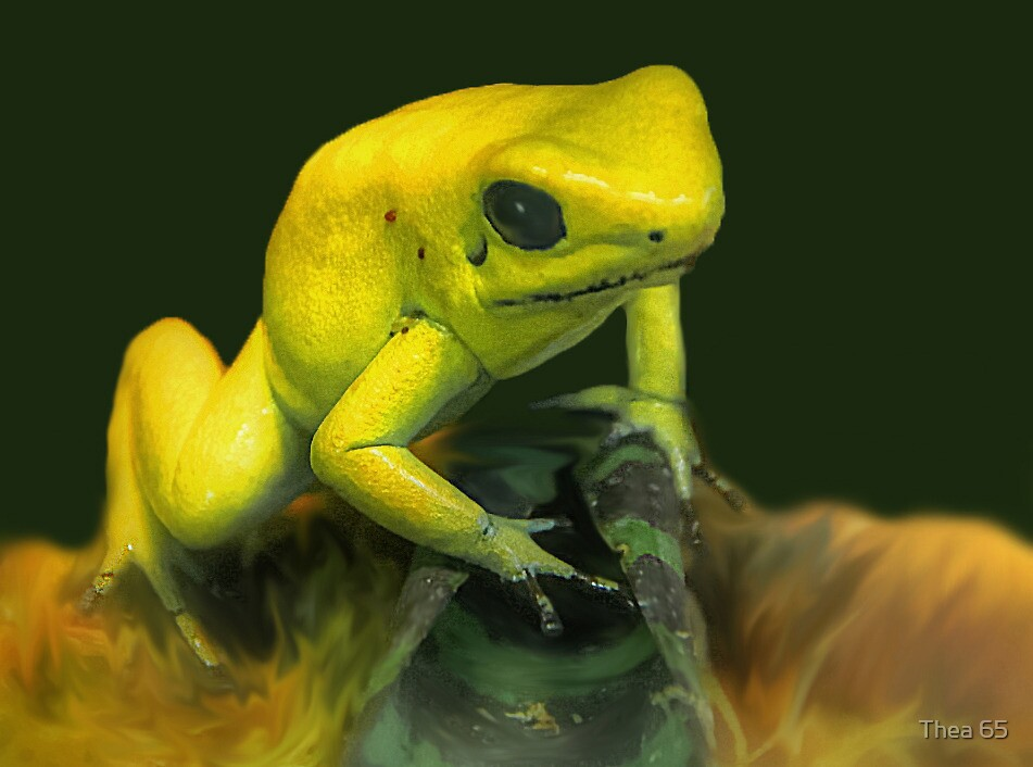 Golden frog by Thea 65