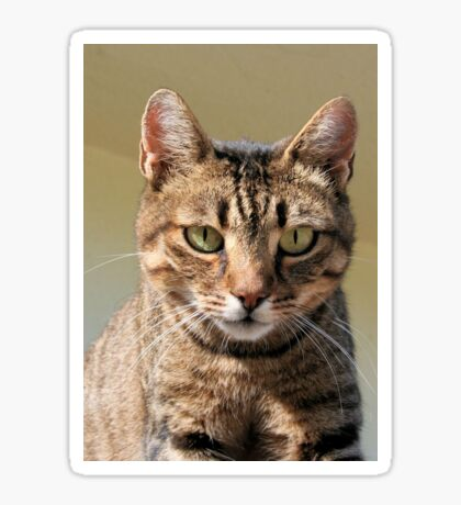 Portrait Of A Cute Tabby Cat With Direct Eye Contact Sticker