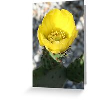 Opuntia Ficus-Indica (Flower of the Prickly Pear) Greeting Card
