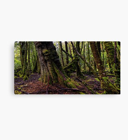 The clearest way to the Universe is through a forest wilderness Canvas Print