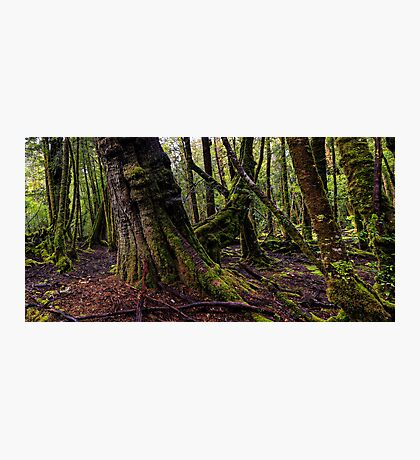 The clearest way to the Universe is through a forest wilderness Photographic Print