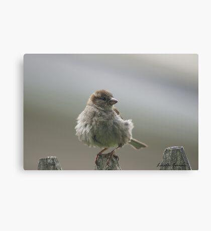 Fluffy Puffy Canvas Print