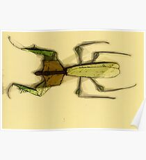 Insect Print 3 Poster