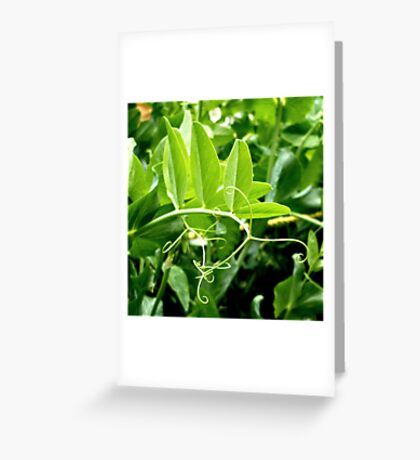 Snow Pea Vines Greeting Card