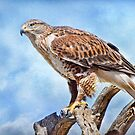 Bird of Prey by Barbara Manis