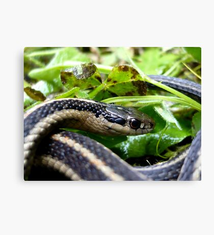 Eye of the Serpent Canvas Print