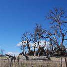 Rocky Outcrop 2 by Catherine Davis