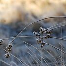 Morning Frost by Catherine Davis
