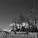 Rocky Outcrop Black and White by Catherine Davis