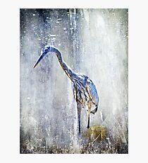Great Blue Heron - Ardea herodias Photographic Print