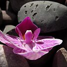 Orchid Composition #4 by Olga