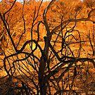 burnt bush looks like burning bush by Tim Horton