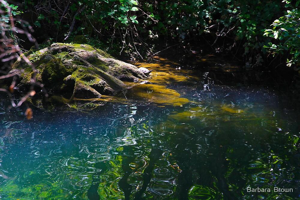 Shady Pool by Barbara  Brown