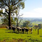 Milking Time, Heath Hill, Gippsland, Victoria, Australia. by johnrf