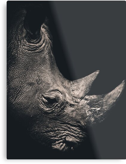 Rhino by jjbentley